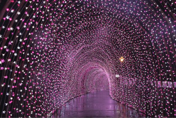 """Đường hầm """"Vũ điệu hoa anh đào"""" lung linh huyền ảo."""
