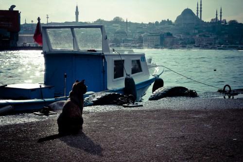de-trai-tim-lai-Istanbul-17