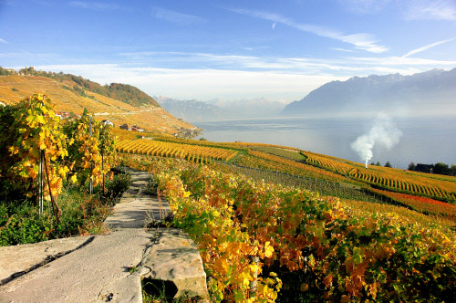 Lausanne: Lavaux UNESCO vineyard
