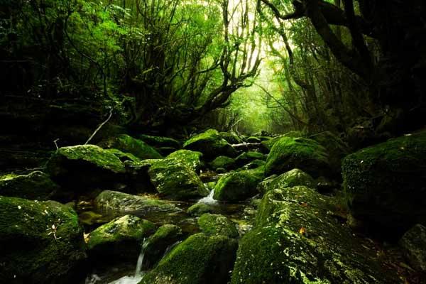 Ốc đảo Yakushima - Nhật Bản