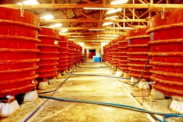 Nhà thùng nước mắm Phú Quốc là một điểm tham quan thú vị
