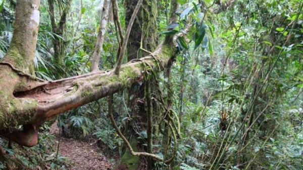 Công viên quốc gia Serra dos Hike Órgãos