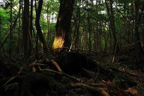 Khu rừng Aokigahara – Nhật Bản
