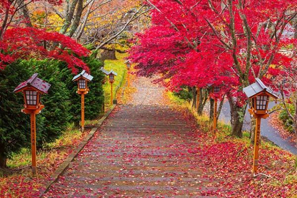Những con đường rợp lá đỏ ở Fujiyoshida cũng khiến du khách ngẩn ngơ, quyến luyến.