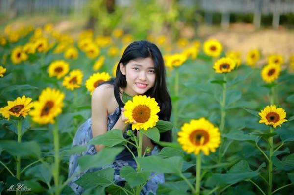 Sắc vàng của hoa hướng dương đã thu hút rất nhiều bạn trẻ, đặc biệt là các bạn nữ đến chụp ảnh, thăm quan