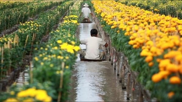 Làng hoa Sa Đéc có 3.600 lao động chuyên trồng hoa và cây cảnh
