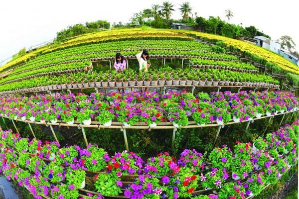 Làng hoa Sa Đéc lung linh sắc màuLàng hoa Sa Đéc lung linh sắc màu