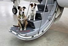 Thủ tục mang thú cưng lên máy bay