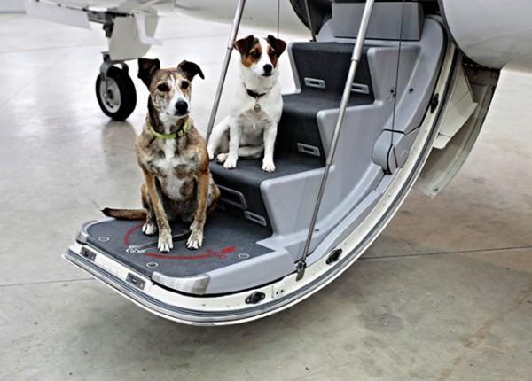 Các loại thú cưng mà Vietjet air sẽ đươc chấp nhận như một hành lý ký gửi thường là: chó, mèo, chuột hay các động vật cảnh khác.
