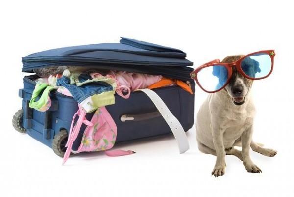 Mang theo thú cưng đi du lịch