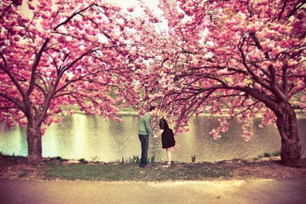 Lần đầu tổ chức Lễ hội hoa anh đào Nhật Bản tại Đà Nẵng