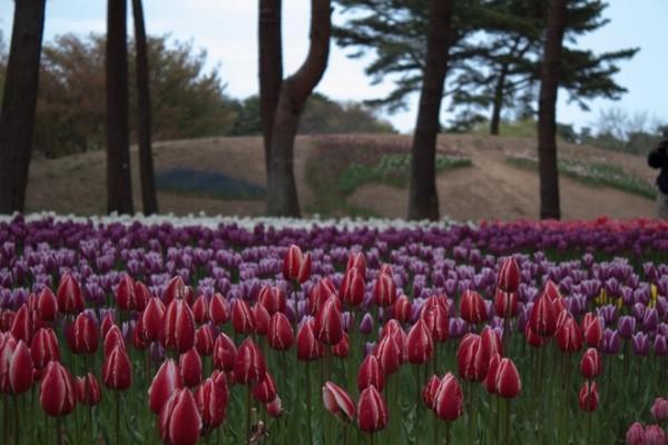 Công viên còn trồng khá nhiều các loại hoa khác nhau