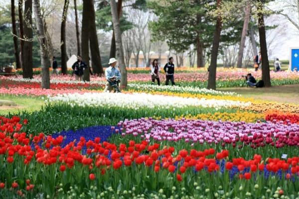 Khám phá thiên đường hoa tại công viên Hitachi Seaside