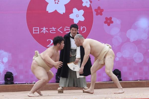 Đây là một nội dung đặc sắc của người dân Nhật Bản muốn gửi tới người dân Việt Nam trong Lễ hội hoa anh đào