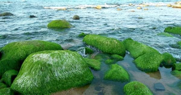 Bờ đá rêu xanh tuyệt đẹp ở Xóm Rớ