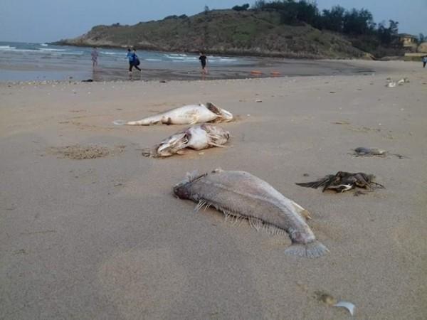 Nguyên nhân cá chết tại miền trung sẽ được công bố vào ngày 29.6