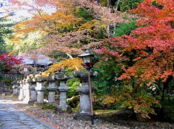 Lá phong đang chuyển màu ở đền Kozan-ji