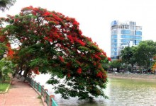 Nối liền Hải Phòng – Phú Quốc- Đà Lạt-Buôn Ma Thuộc