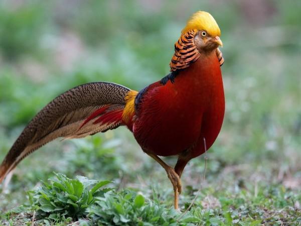 Ngắm chuồng chim khủng của đại gia - Các loài chim quí đẹp lạ.