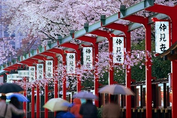 Khám phá các mùa du lịch trong năm tại Nhật Bản