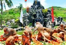Vé máy bay giá rẻ khám phá đảo khỉ Nha Trang