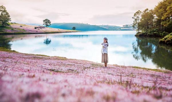 Đồng cỏ hồng