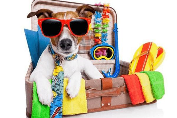 Làm sao để có những chuyến du lịch tiết kiệm