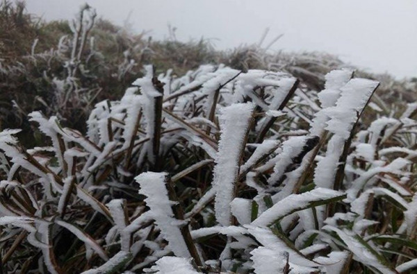 Mẫu Sơn tuyết nhiệt đới
