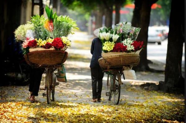 Bình dị những xe hoa