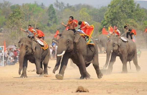 Lễ hội đua voi đặc sắc tại Ban Mê