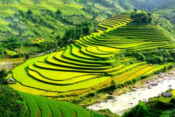 Ruộng bậc thang Sapa được bình chọn là ruộng bậc thang đẹp nhất thế giới