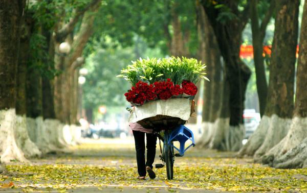 Cùng nhau ngắm sắc xuân trên 36 phố phường Thủ Đô