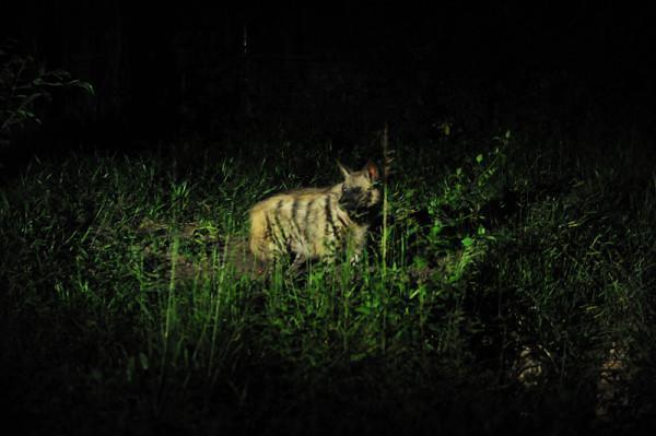 Tham quan thú đêm vườn Quốc Gia Nam Cat Tien