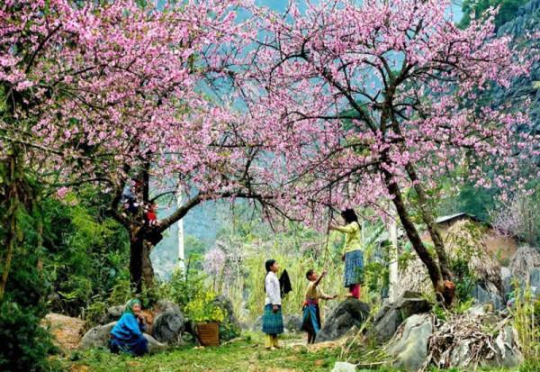 Lễ hội hoa đào xứ Lạng Xuân Mậu Tuất 2018