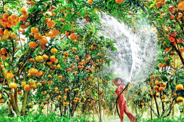 Miệt vườn trái cây