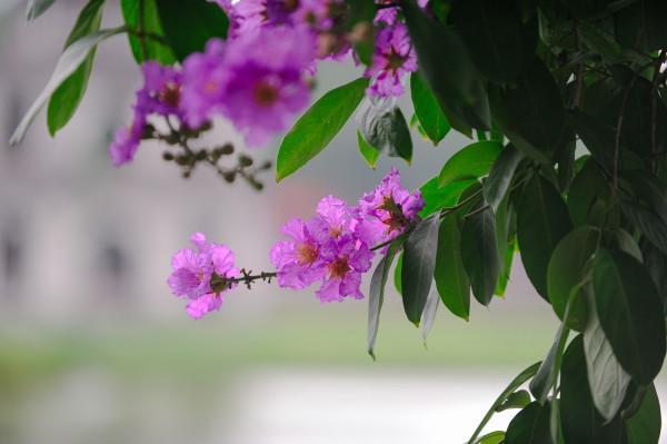 Màu hoa làm dịu lại những vội vã của cuộc sống ngày thường