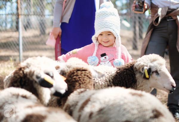 Zoodoo – Sở thú đẹp như Châu Âu nhất định phải ghé khi đến Lâm Đồng