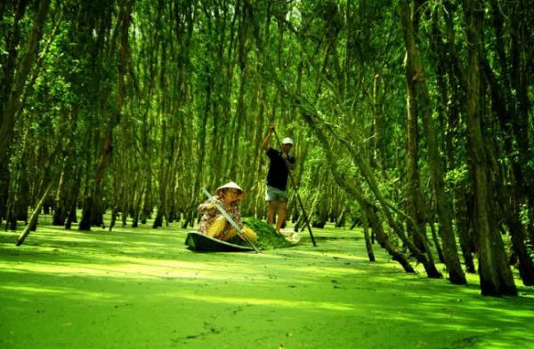 Cà Mau Nổi Tiếng Với Rừng U Minh