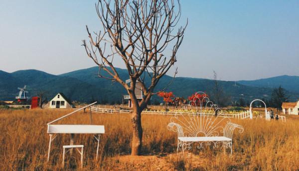 Khu Giã Ngoại Thuận Phước Field