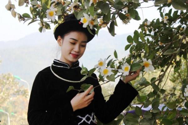 Ngắm rừng hoa sở Quảng Ninh