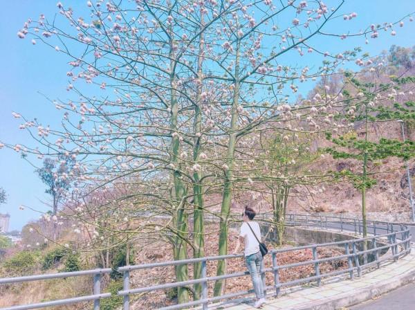 Đường cây khô Hàn Quốc1