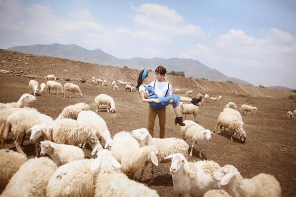 Cánh đồng nuôi cừu1