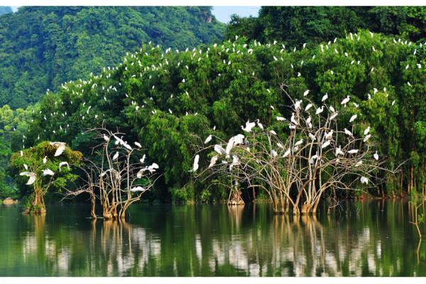 Sân chim Vàm Hồ1