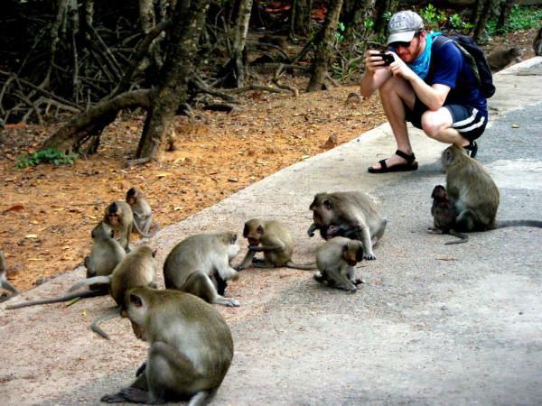 Đảo khỉ1