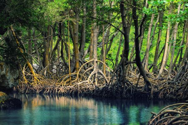 Khu đa dạng sinh học Lâm ngư trường 184 – Rừng đước Năm Căn