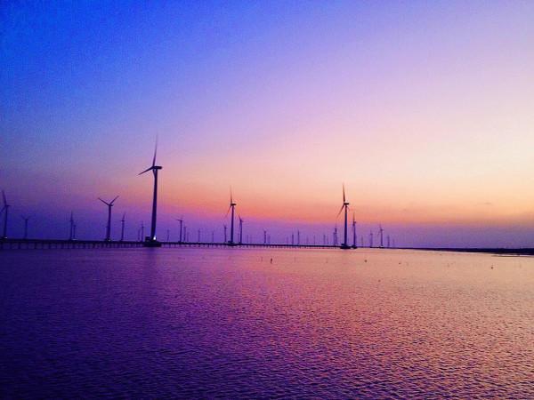 cánh đồng gió bạc liêu4