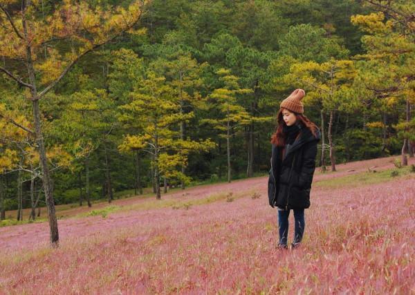 cỏ hồng 10
