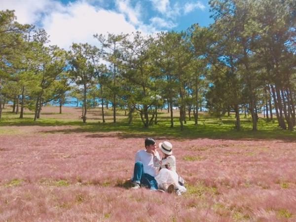 cỏ hồng 12