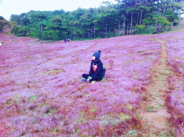 cỏ hồng 6