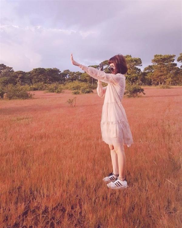cỏ hồng 8